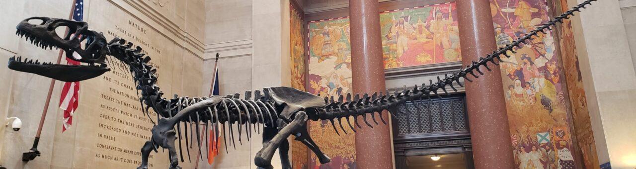 アメリカ自然史博物館 恐竜の化石模型